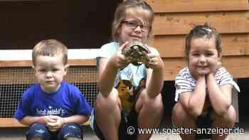 Warsteiner Familie hat ihre entlaufene Schildkröte wieder - soester-anzeiger.de