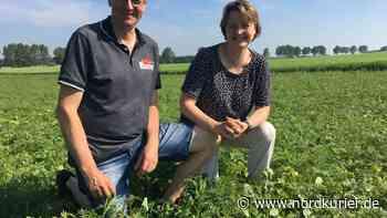 Blühwiesen für Bienen an der A19 bei Teterow – mit Patenschaften - Nordkurier