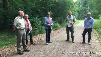 Teterow setzt bei Waldumbau auf natürliche Verjüngung - Nordkurier