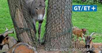 Wildpark Hardegsen öffnet wieder die Türen - Göttinger Tageblatt