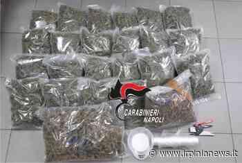 Marano di Napoli: 8 chili di droga nascosti in cantina - Irpinia News