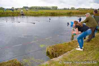 Dit jaar terug hondenzwemming in Sint-Baafs-Vijve