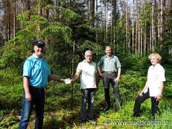Albbruck: Bürgerstiftung Albbruck unterstützt den Wald der Zukunft - SÜDKURIER Online