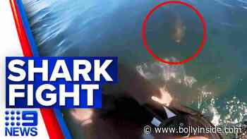 Video: Bodyboarder confronted by shark on the Mornington Peninsula | 9 News Australia live news - BollyInside