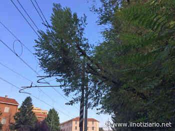 Milano-Asso, treni a passo d'uomo a Paderno Dugnano: albero pericolante sui binari - Il Notiziario