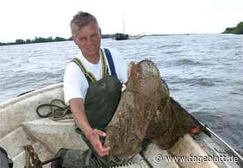 Fischsterben: Tideelbe wird zur Todeszone - Jork - Stader Tageblatt - Tageblatt-online