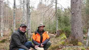 Kundenbetreuer der einfühlsamen Art im Naturfriedhof Mittenwald - Merkur Online