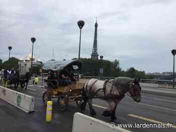 Launois-sur-Vence/Paris: une jument ardennaise monte à la capitale - L'Ardennais