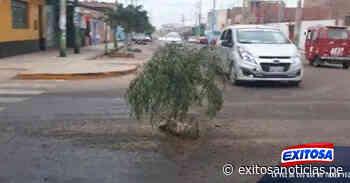 Huaura: dejan plantas en medio de pistas en mal estado como señal de protesta - exitosanoticias