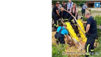 Rettungsaktion in Wardenburg: Pferd mit Muskelkraft und Feuerwehrschläuchen gerettet - Nordwest-Zeitung