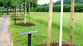 In Olsberg wird eine neue Form der Bestattung angeboten - Westfalenpost