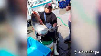 Pescador en Ilo logra terminar el colegio con el programa 'Aprendo en Casa' del Minedu - ElPopular.pe