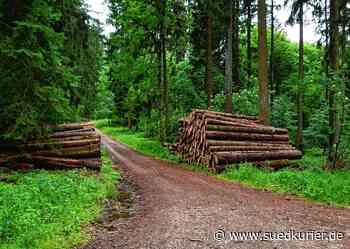 Bodman-Ludwigshafen: Sorgen um den Wald: Der Forst leidet unter Schädlingsbefall und höherem Freizeitdruck - SÜDKURIER Online