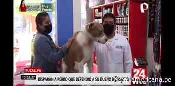 Pucallpa: perro pitbull es baleado por delincuentes tras defender a su dueño de un asalto - Panamericana Televisión