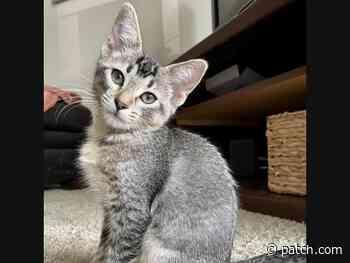 Saint Paul Pets Waiting To Be Adopted: Malbec, Ferrari, Minot & More - Saint Paul, MN Patch