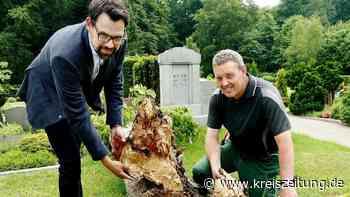 Kirchenvorstand muss 100 Jahre alte Lindenallee auf dem Friedhof abholzen lassen - kreiszeitung.de