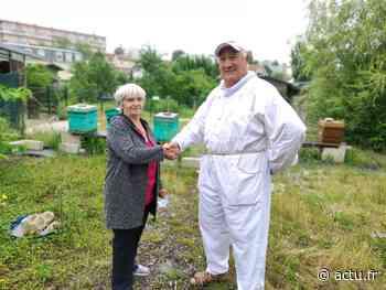 Melun. Au rucher du jardin des Carmes, jardiniers et apiculteurs main dans la main - actu.fr