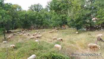 "Floirac. Balade nature ""Biodiversité et pastoralisme"" - ladepeche.fr"