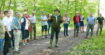 Tour im Wald: Experte aus Blieskastel erklärt Lebensnetz - Saarbrücker Zeitung