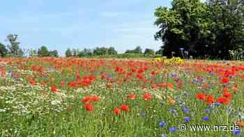 Weeze will mehr Artenvielfalt auf den Feldern schaffen - NRZ