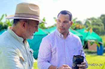 Aguada entrega más de 4,000 árboles de cacao a agricultores - Diario Metro de Puerto Rico