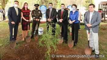 En Dolores Hidalgo siembran a nieto del Árbol de la Noche Triste - Unión Guanajuato