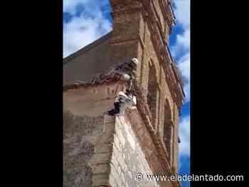 Rescatan una cigüeña atrapada en la iglesia de Pinillos de Polendos - El Adelantado de Segovia