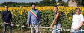 A Ornago il primo labirinto di girasoli - Il Cittadino di Monza e Brianza