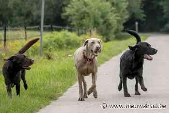 """Honden, paarden, varkens, … politie vangt negen dieren per week: """"Zeer belastend voor korps"""""""