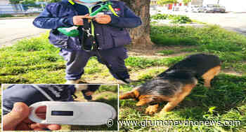 Arzano. Deiezioni canine in strada e mancati microchip, sanzionati i proprietari. I controlli della polizia locale - Grumo Nevano News