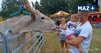Circus Barlay lockt mit Familienpark nach Wredenhagen bei Wittstock - Märkische Allgemeine Zeitung