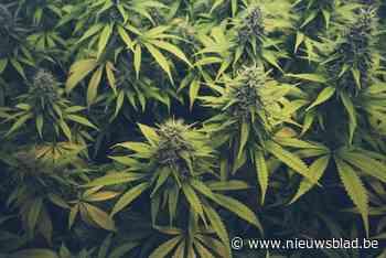 Man smijt kilogram cannabis uit het raam tijdens politieachtervolging in Hoei - Het Nieuwsblad