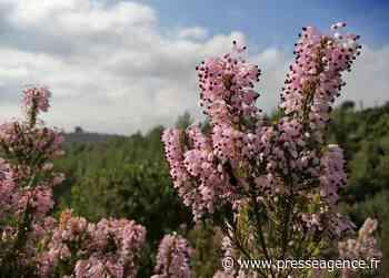 GARDANNE : Projet européen Forest'Ed, coordonné par Forêt Modèle de Provence - La lettre économique et politique de PACA - Presse Agence