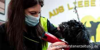 In Emsdetten darf der Hund wieder zum Friseur - Dorstener Zeitung