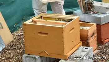 Balma. La fête du rucher est de retour dimanche - ladepeche.fr
