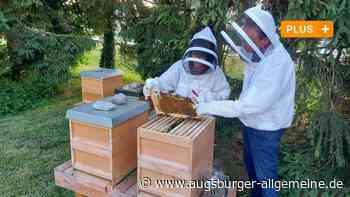 Jungimker im Raum Neuburg: Warum boomt das Bienenzüchten? - Augsburger Allgemeine