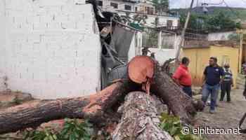Tormenta Elsa tumba árboles y produce apagones en Puerto Cabello - El Pitazo