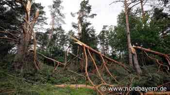 Sturm knickt bei Hilzhofen Kiefern um wie Zahnstocher - Nordbayern.de