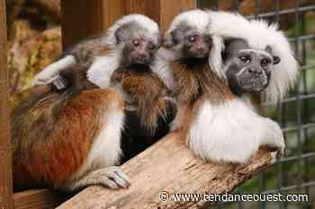 De nouvelles naissances au parc animalier Biotropica à Val-de-Reuil - Tendance Ouest