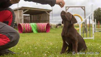 Tiere Leinenpflicht: Angst vor Bissen - Laufen in Birkenwerder zu viele Hunde ohne Leine herum? - moz.de