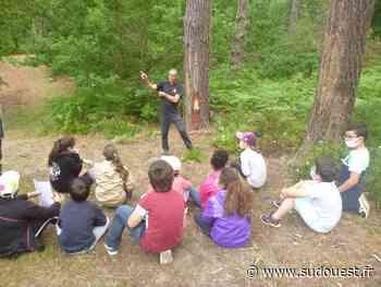 La Teste-de-Buch : les élèves du Captalat explorent la forêt usagère - Sud Ouest