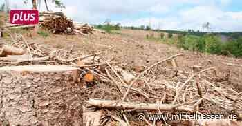 Gemeindewald: Klimawandel kostet Eschenburg Millionen - Mittelhessen