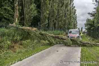 Boom kraakt af door wind en komt over de weg te liggen