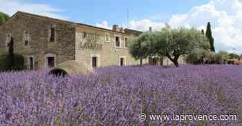 Suivez le guide de l'été : randonnées littéraires à Manosque et lancement de la distillation de lavande à Cabrières-d'Avignon - La Provence