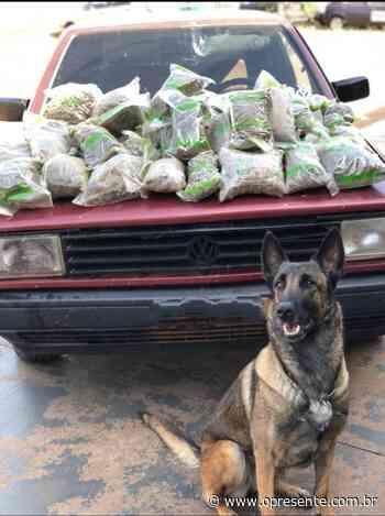 BPFron apreende 20 quilos de maconha em Santa Helena nesta manhã - O Presente