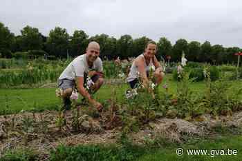 Nieuwe bloemplukweide meteen schot in de roos - Gazet van Antwerpen