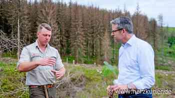 Klimawald der Harz Energie entsteht in Sankt Andreasberg - HarzKurier