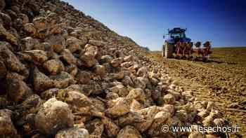 Cristal Union cherche 2.000 hectares de betterave pour sa sucrerie d'Erstein - Les Échos