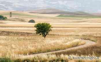 """Piano di sviluppo locale, """"Lucera Non Tace"""" avanza proposte sull'Agricoltura - lucerabynight.it"""