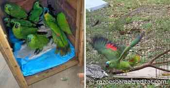 Família de papagaios acolhidos durante tempestade de granizo retorna à natureza no PR - Razões Para Acreditar